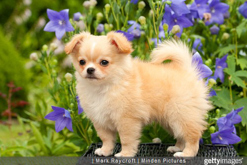 Comment bien choisir son chien ?