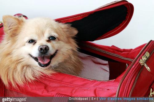 voyage algerie chien