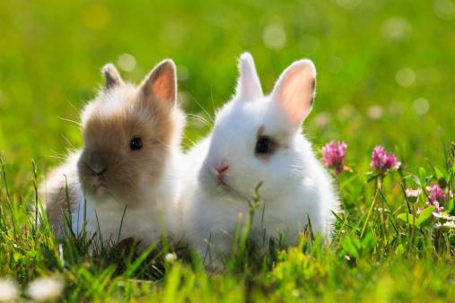 Question d'internaute : peut-on laisser son lapin ou son hamster en liberté dans la maison ?