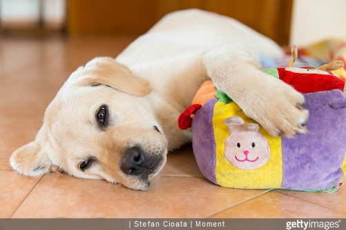 Voulez-vous un chien joueur ? Un chien soumis ou avec du caractère ?
