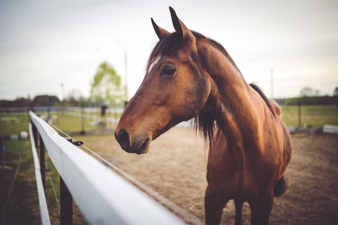 Les réglementations à connaître pour l'acquisition d'un cheval