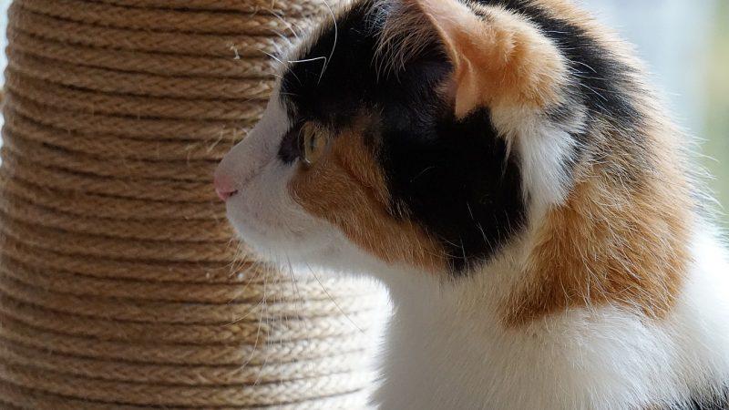 Fabriquez vous-même un arbre à chat adapté aux besoins de votre félin
